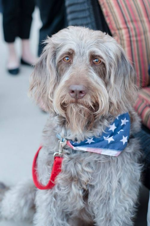Good-looking-Gander