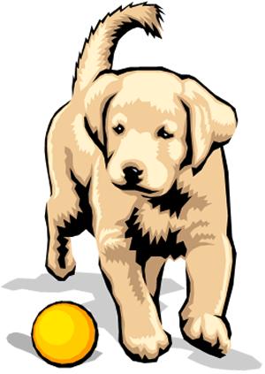 Lab-puppy