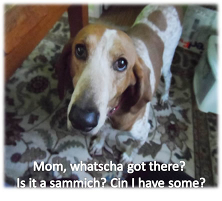 Chester-wants-sandwich