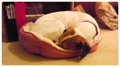 Emily-sleeping-Olives-bed
