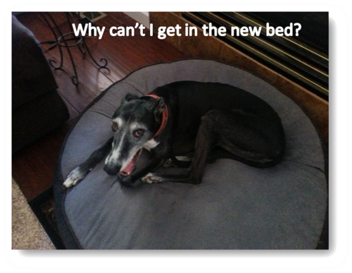 Twiggy wants new bed