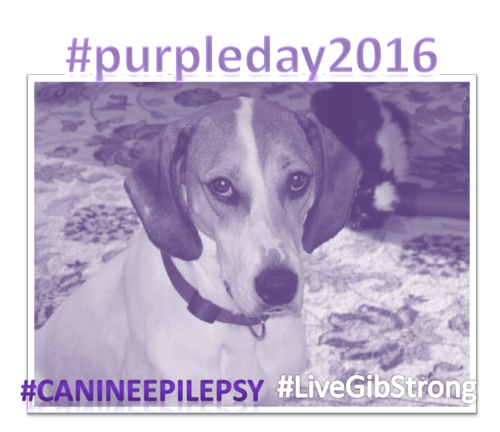 Canine eplilepsy purple day emily