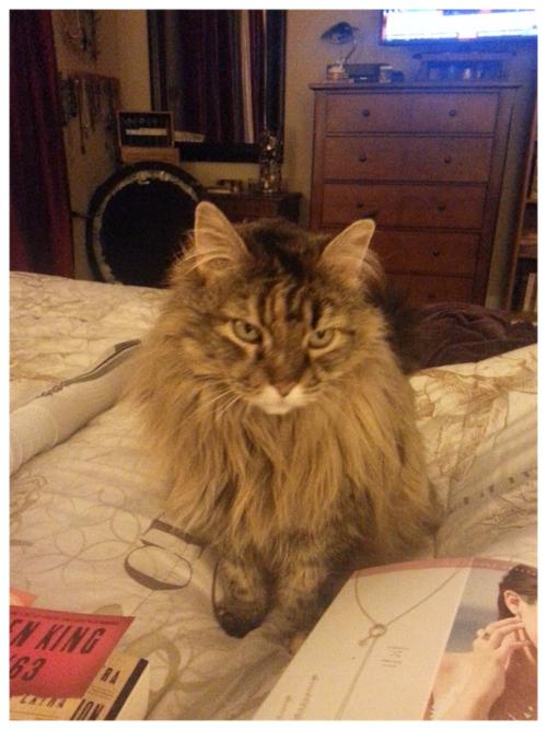 Molly pensive