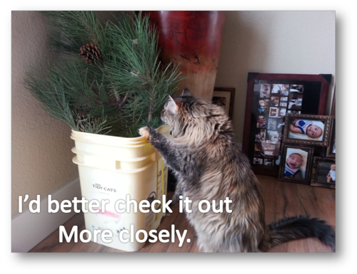 Molly checks out plant more closely