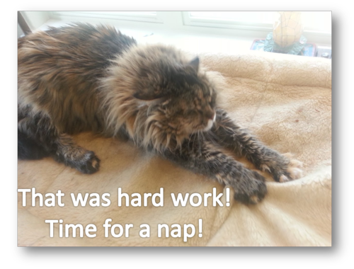 Molly hard work