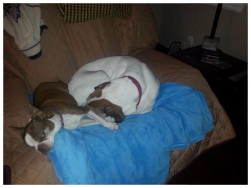 Olive Emily asleep on Chloe's blanket