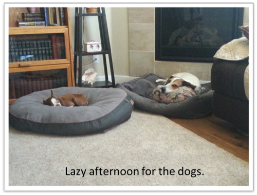 Sleepy dogs.