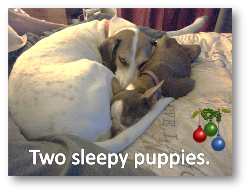 Two sleepy puppies Emily Olive