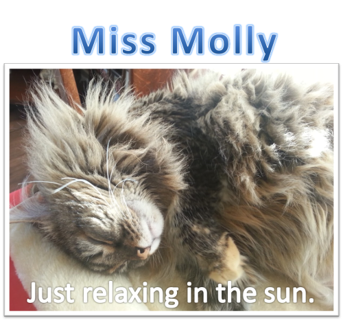 Relaxing in the sun Molly