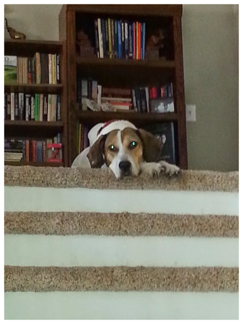Emily staring from stairs
