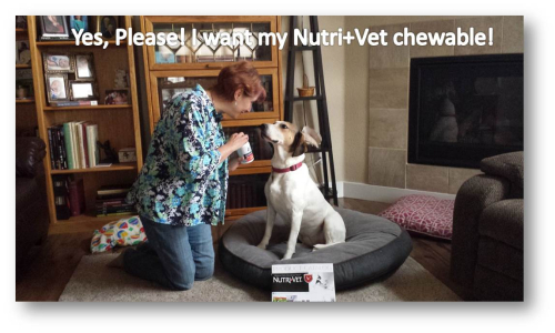 Emily says please for her Nutrivet chewable