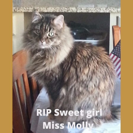 RIP Sweet girl Miss Molly