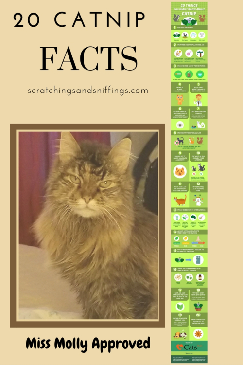 Catnip facts miss molly approved