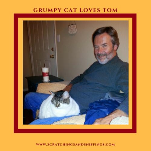 Grumpy cat loves tom