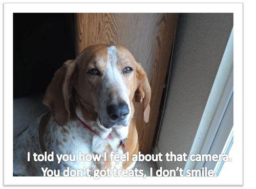 Chester-no-treats-no-smile