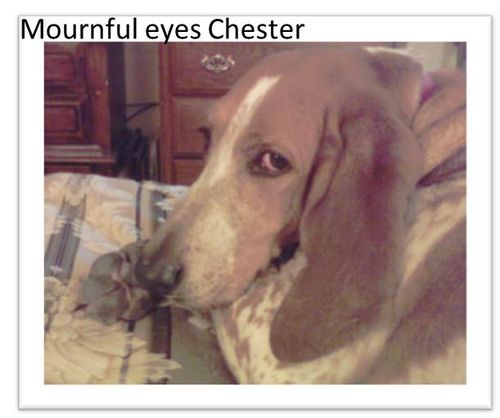 Mournful-eyes-chester