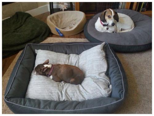 Olive ONP bed