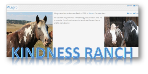 Kindness ranch horse named Milagro
