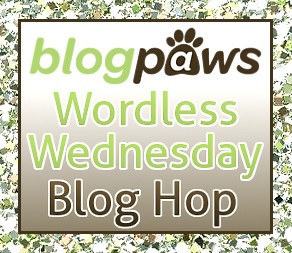 Blogpaws blog hop