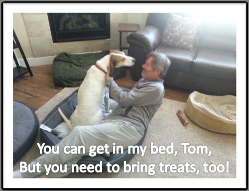 Emily Tom bed treats