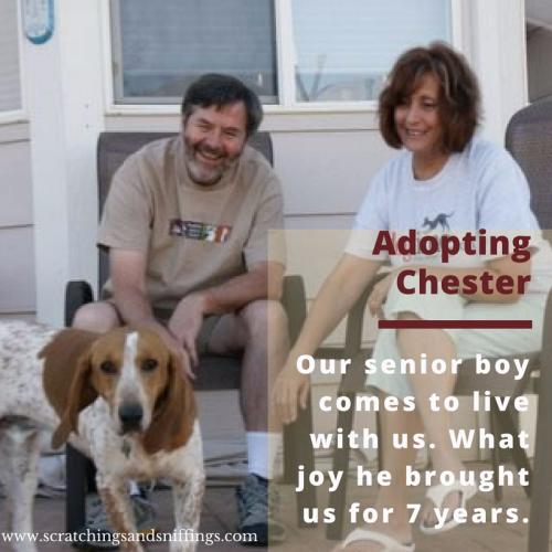 Adopting chester