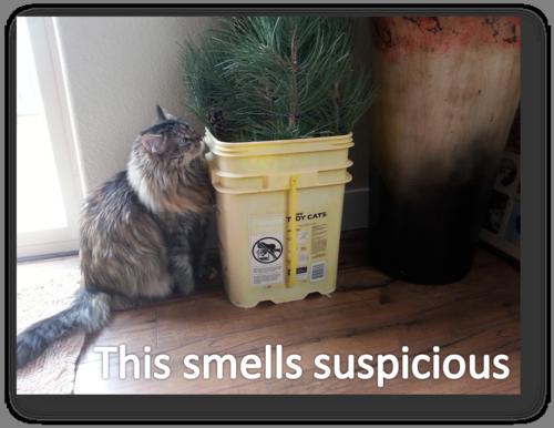 Molly this smells suspicious