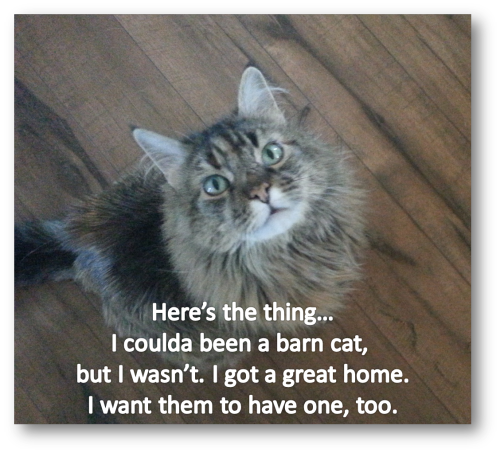 Molly talking Barn Cats