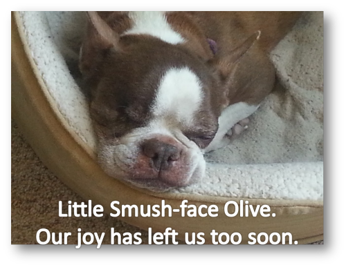 Smushface Olive too soon