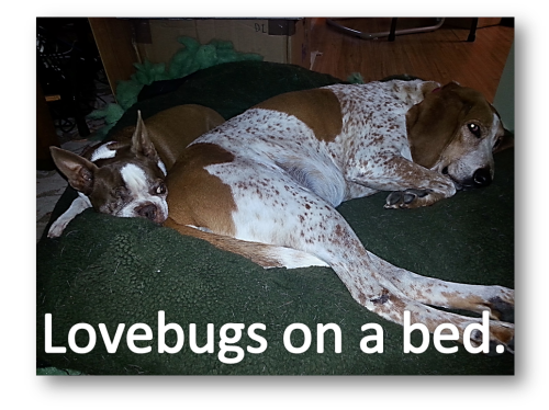Lovebugs on a bed