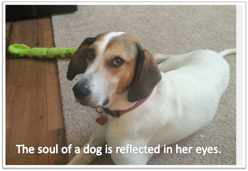 Emily soulful eyes