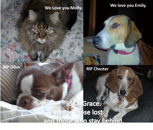 All the precious pets Molly Emily Chester Olive