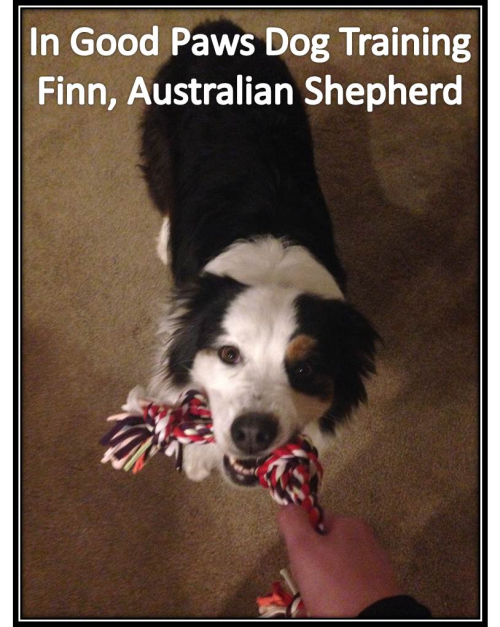 Finn-In-Good-Paws
