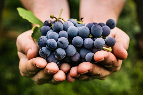 Grapes 7 foods not for cats