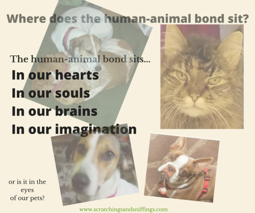 Where does the human-animal bond sit