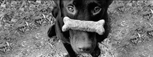 Dog_with_bone