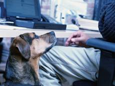 Bring_your_dog_to_work