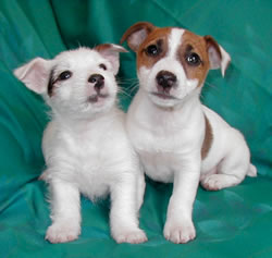 Aw_two_adorable_puppies