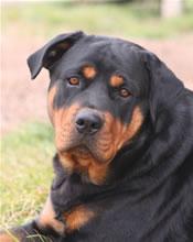 Beautiful_black_dog